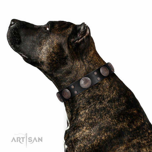 Leather dog collar with stylish studs created pet