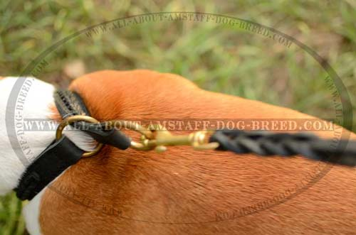 Exceptional Amstaff Dog Collar With Rust Resistant  O-Rings