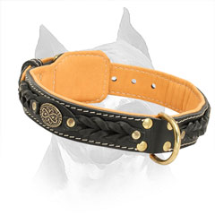 2 Ply Leather Amstaff Collar with Brass Buckle and D-ring