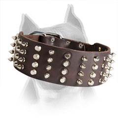 Amstaff Breed Leather Collar with Riveted Fittings
