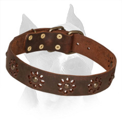 Amstaff Leather Collar with Brass Fittings