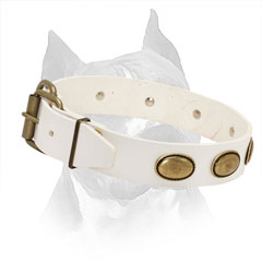 White Leather Collar for Amstaff with Easily Adjustable Brass Hardware