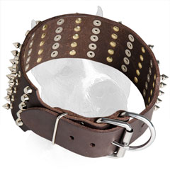 Wide Leather Collar for Amstaff with Steel Nickel Plated  Spikes and Pyramids