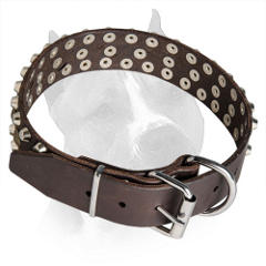 Adjustable Leather Collar for Amstaff with Sturdy Buckle and D-ring