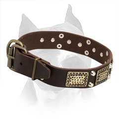 Leather Collar for American Staffordshire Terrier with Sturdy Hardware