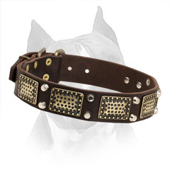 Amstaff Leather Collar with Nickel Cones and Brass Plates