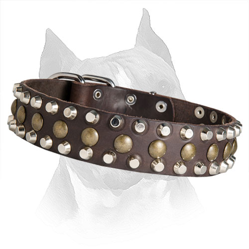 Amstaff Leather Collar with Sturdy Rust Resistant  Decoration