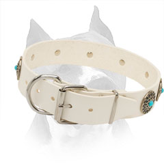 White Leather Collar for Amstaff with Easily Adjustable Hardware