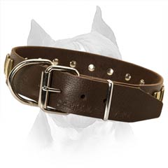 Leather Collar for Amstaff with Steel Nickel Plated Hardware