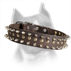 Spiked and Studded Leather Collar for Stylish Amstaff