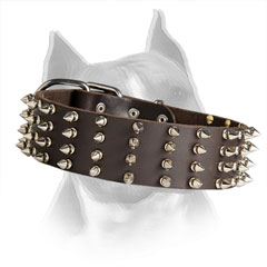 Amstaff Leather Collar with Riveted Nickel Spikes