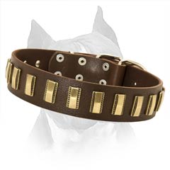 Amstaff Leather Collar with Durable Rust-resistant Plates