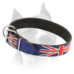 Painted Leather Collar for Amstaff with Steel Nickel Plated Hardware