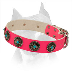 Pink Leather Amstaff Collar with Riveted Circles