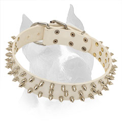 Spiked White Leather Collar for Stylish Amstaff