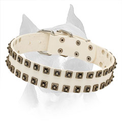 Amstaff White Leather Collar with 2 Rows of Nickel Studs