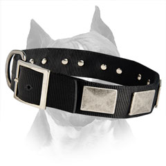 All Weather Nylon Dog Collar With Strong Fittings