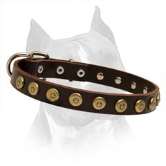 Attractive Dog Collar With Brass  Hardware