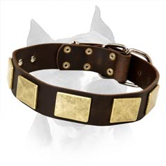 Best Leather Dog Collar Will Draw Attention Of People  Around