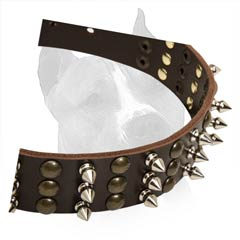 Extra Wide Amstaff Dog Collar With Rust-Proof Fittings