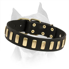Dog Collar With Brass Buckle And D-Ring