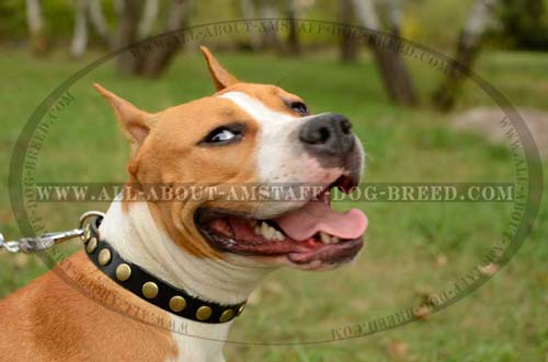 Specialized Training Dog Collar With Beautiful  Decoration