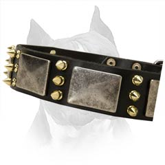Amstaff Dog Collar With Vintage Brass Plates And  Spikes