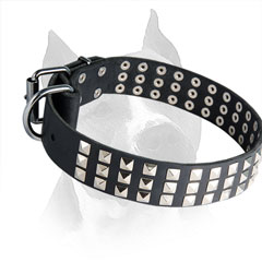 Leather Amstaff Dog Collar with Steel Nickel Plated Buckle and D-ring