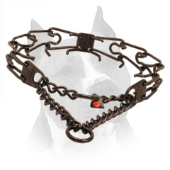 Prong Collar Black Stainless Steel for Amstaff Behavior Correction