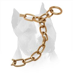 Curogan Slip Collar For Amstaff With Gold Like O-Rings