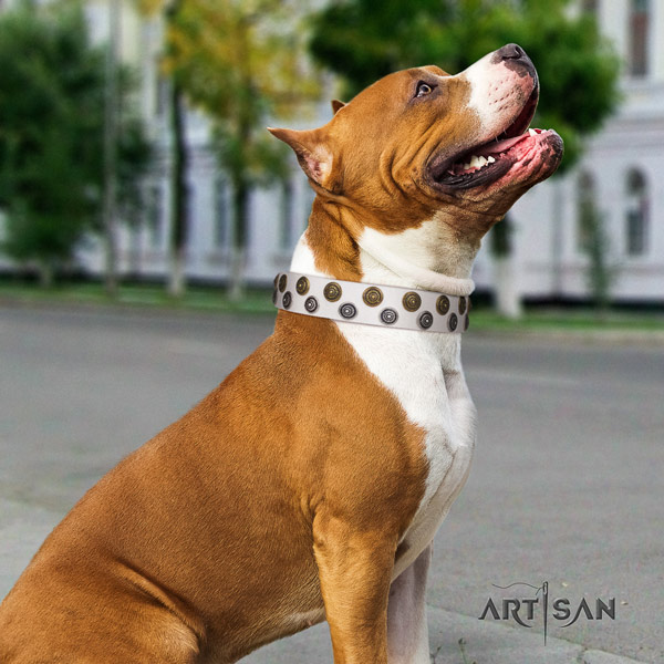Amstaff unique genuine leather dog collar with embellishments for fancy walking
