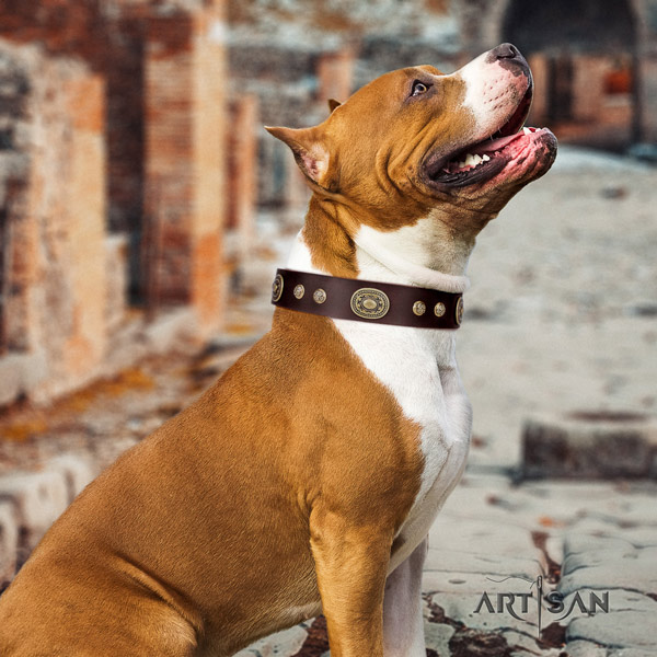 Amstaff handy use natural genuine leather dog collar with studs