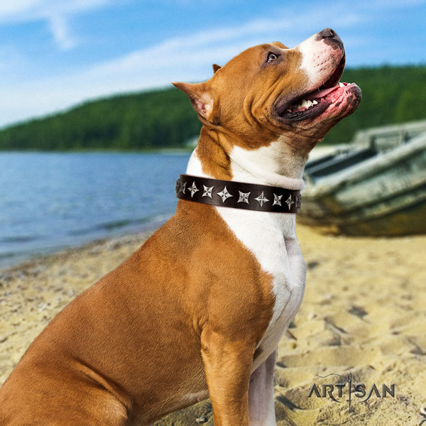 Amstaff handy use full grain natural leather dog collar with adornments