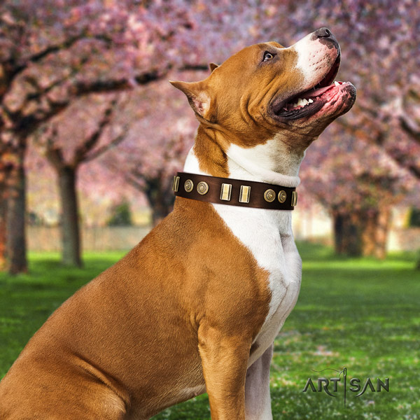 Amstaff daily walking natural genuine leather dog collar with embellishments