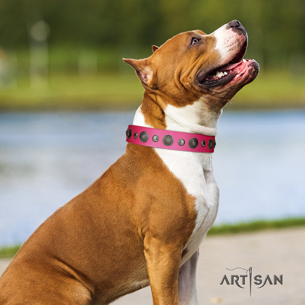 Amstaff handy use full grain leather dog collar with studs