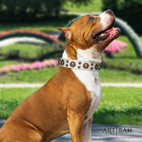 Amstaff incredible leather dog collar with embellishments for comfy wearing