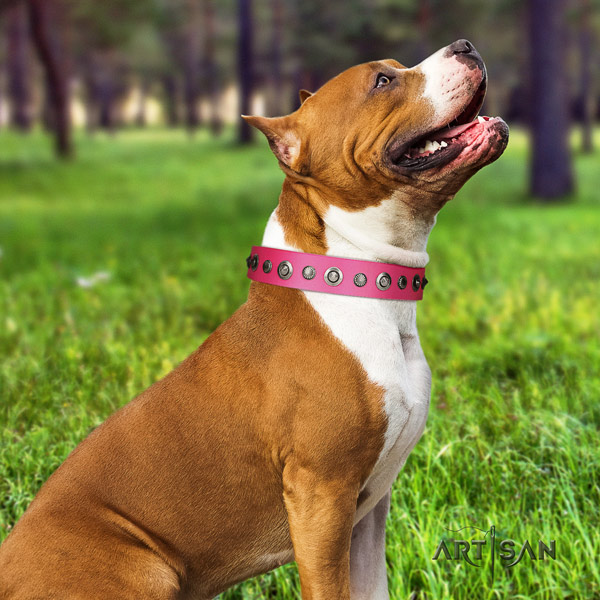 Amstaff stylish walking natural genuine leather dog collar with embellishments