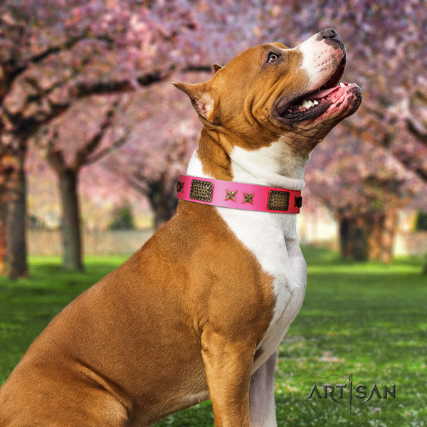 Amstaff stylish walking full grain natural leather dog collar with studs