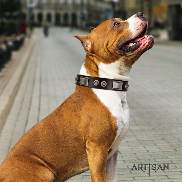 Amstaff stylish walking full grain natural leather dog collar with adornments
