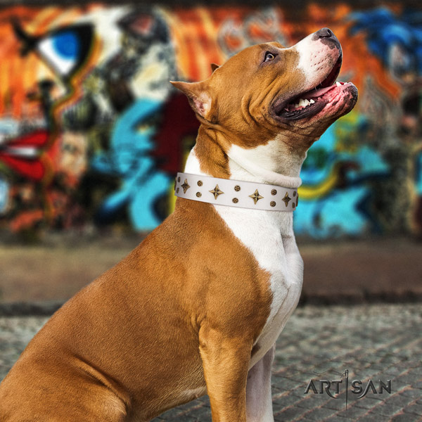 Amstaff top notch full grain leather dog collar with embellishments for everyday use