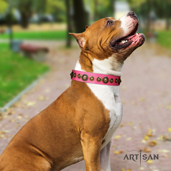 Amstaff extraordinary full grain leather dog collar with adornments for comfy wearing