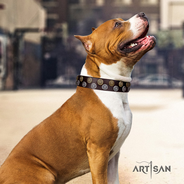 Amstaff top notch leather dog collar with embellishments for handy use