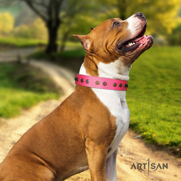 Amstaff trendy leather dog collar with studs for handy use