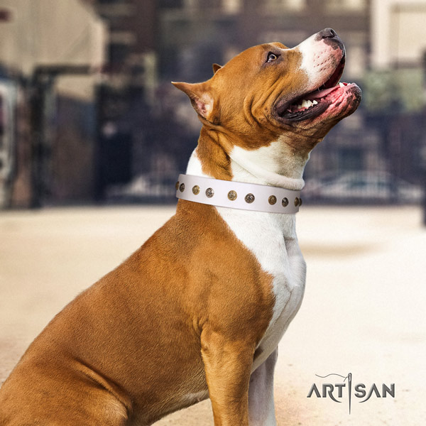 Amstaff significant leather dog collar with adornments for handy use