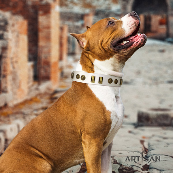 Amstaff handy use full grain natural leather dog collar with decorations