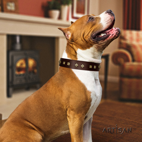 Amstaff daily walking natural genuine leather dog collar with studs