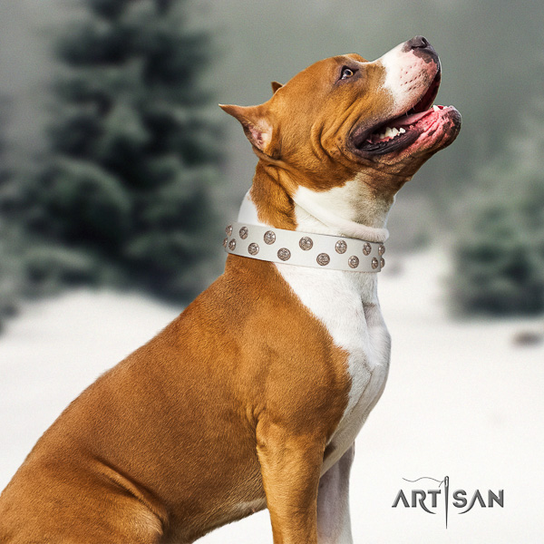 Amstaff embellished leather dog collar for walking
