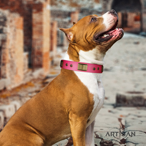 Amstaff daily walking genuine leather dog collar with embellishments