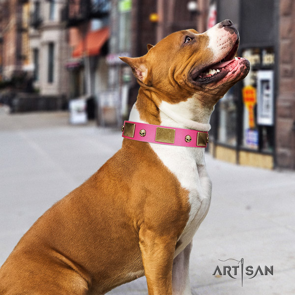Amstaff easy adjustable genuine leather dog collar for comfortable wearing