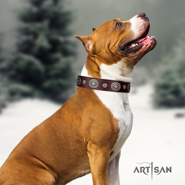 Amstaff inimitable leather dog collar with decorations for walking